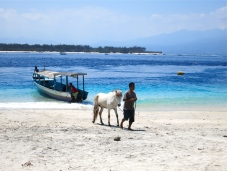 Gili Trawangan – where the taxis are horse-drawn carriages and you befriend a giant turtle.